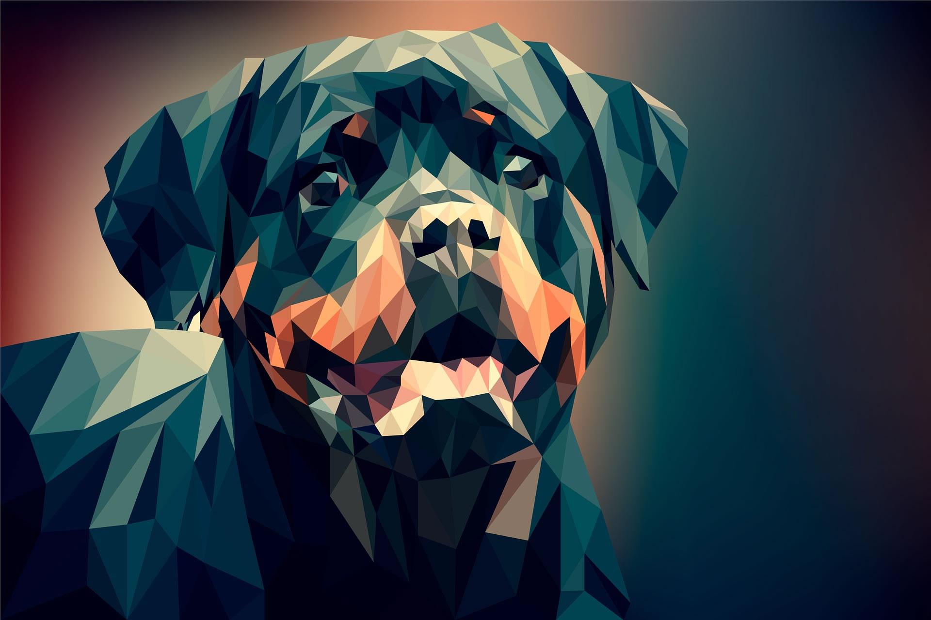 dog-3275593_1920